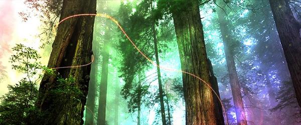 relaxationsalon forest.jpg